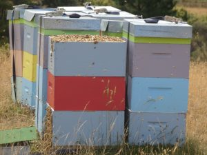 genuine manuka honey uk